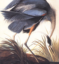 bs ahp John Audubon Great Blue Heron