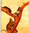 bs na Audubon Florida Rat