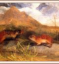 bs na Audubon Mexican Marmot Squirrel