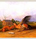 bs na Audubon Tawny Weasel