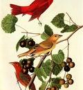jja 0008 Summer Tanager Bayou Sara Louisiana August 27, 1821 sqs
