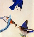 jja 0010 Eastern Bluebird 1820 1822 Louisiana sqs