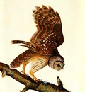 jja 0012 Barred Owl about 1821 sqs