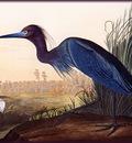 ma Audubon Blue Crane Jeron