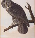 ma Audubon Great Generous Owl