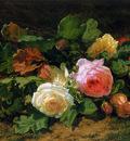 Backhuyzen Sande van de Gerardine Roses Sun