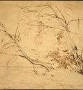 Corot Clump of Trees at Civita Castellana, 1826, NG Washingt