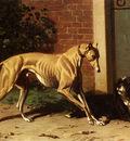 Cunaeus Conradyn A Greyhound And A Shepherd Dog