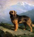 Cunaeus Conradyn Mastiff in mountainous landscape Sun