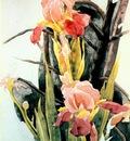 demuth flowers irises c1925