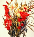 demuth red and yellow gladioli
