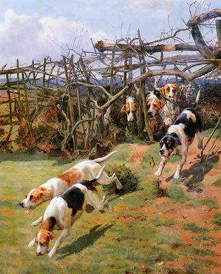 Dodd Arthur Charles Through the fence Sun
