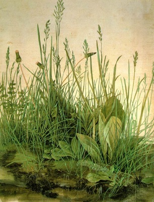 DURER THE LARGE TURF,1503, WATER COLOUR,Graphische Sammlung