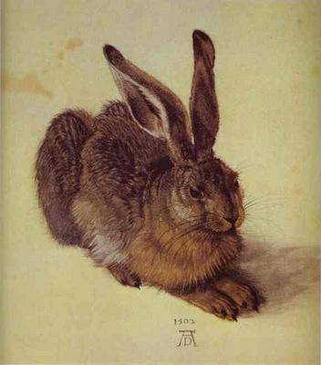 Albrecht Durer A Young Hare