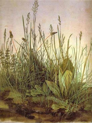 Albrecht Durer The Large Turf