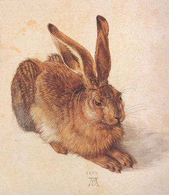 bs Albrecht Durer The Hare