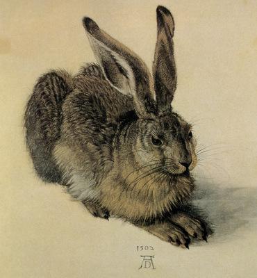 kb Durer Albrecht The Hare