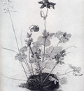 Durer The Piece Of Turf With The Columbine