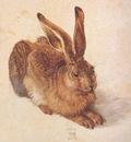 bs Albrecht Durer The Hare