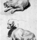 Eeckhout van den Gerbrand Study of a dog Sun