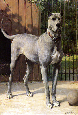 Eerelman Otto Blue dog Sun