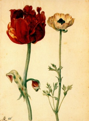 flegel tulip and white poppy 1627