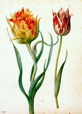 flegel two tulips 1627