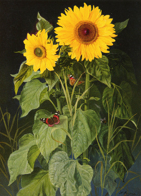Fristrup Niels SUNFLOWERS