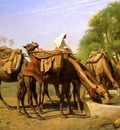 Camels at the Fountain