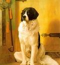 Study of a Dog