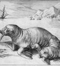 Gerritsz Hessel Walrus Sun
