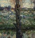 gogh orchard bloom poplars