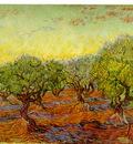 van Gogh Olivlund, 1889, 74x93 cm, F 586, JH 1854, Goteborgs