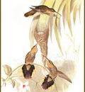 PO ptb 13 Colibri Tachete
