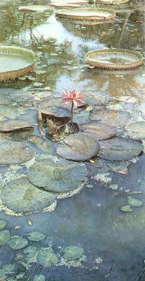 kb Hanks Steve Water Lilies in Bloom