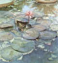 kb Hanks Steve Water Lilies in Bloom