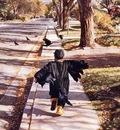 Steve Hanks As the Crow Flies, De
