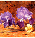 bs flo John Jessop Hardwick Iris And Christmas Rose