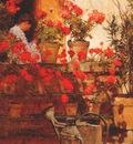hassam geraniums