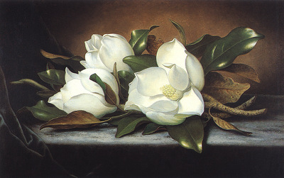 bs Martin Johnson Heade Giant Magnolias