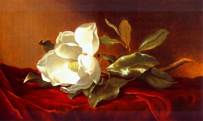 heade a magnolia on red velvet c1885