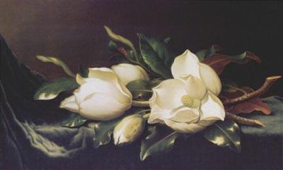 heade magnolias c1894