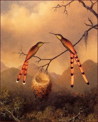 lrsHeadeMartinJohnson 2HummingbirdsWithYoung
