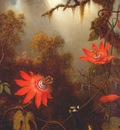heade 2 hummingbirds perched on passion flower vines c1870