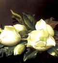 martin johnson heade 1894 fl art csg029