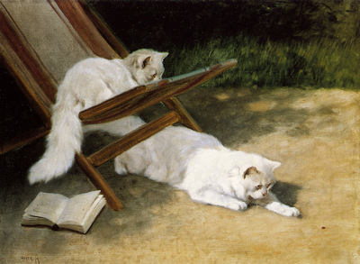 Heyer Arthur Persian cats Sun