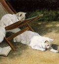 Heyer Arthur Persian cats Sun