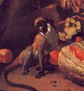 lrsd Hondeoeter Mechior Monkey Fruit