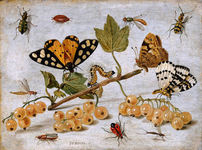 Kessel van Jan Insects and fruits Sun
