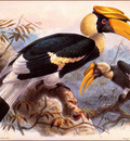 bs na J G Keulemans Great Hornbill